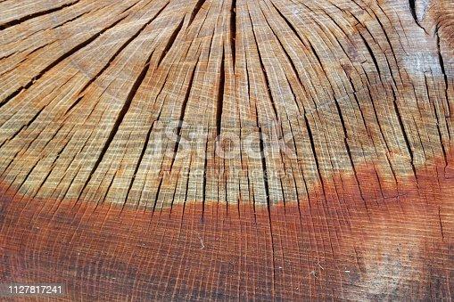 istock Cross section of a cut tree stump 1127817241