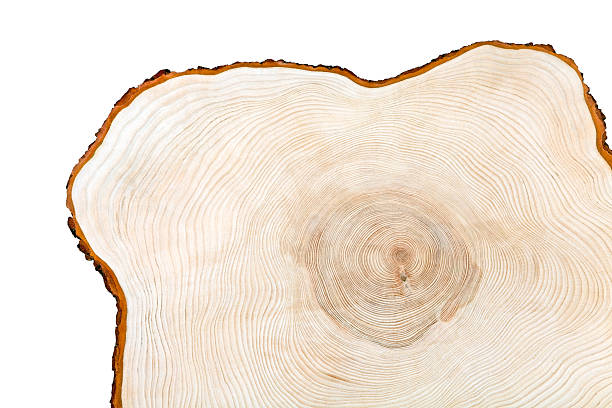 Cross section of a piece of wood stock photo