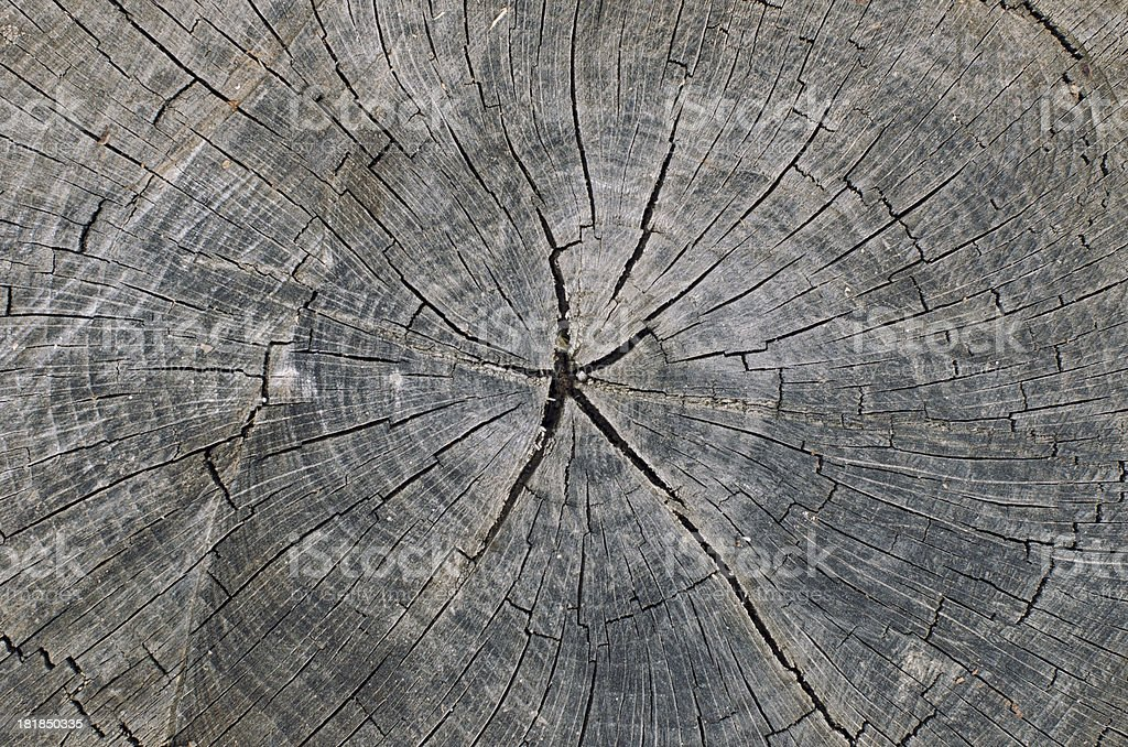 Cross section of a tree royalty-free stock photo