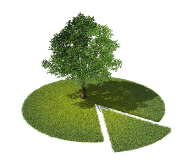 cross section of ground with grass and tree stock photo