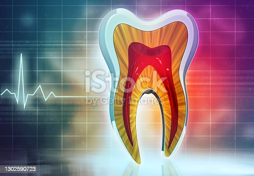 Cross section of human tooth. 3d illustration