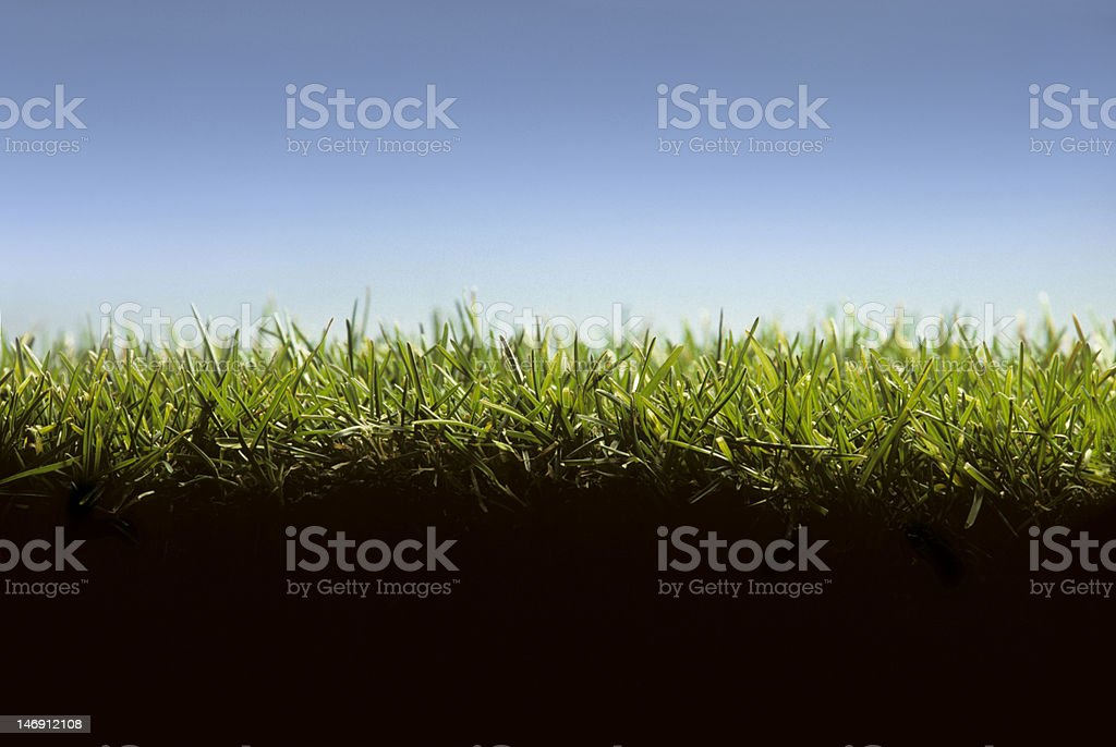 Cross section of lawn at ground level stock photo