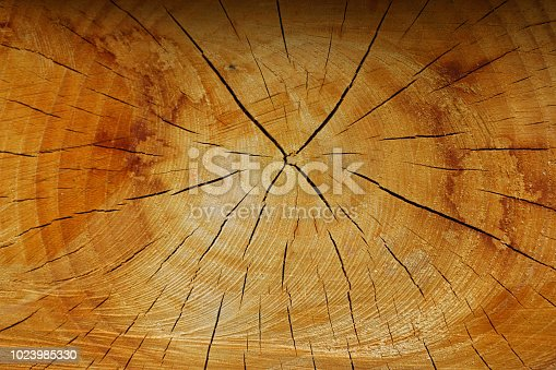istock Cross section of log with growth rings 1023985330