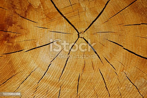 istock Cross section of log with growth rings 1023985368