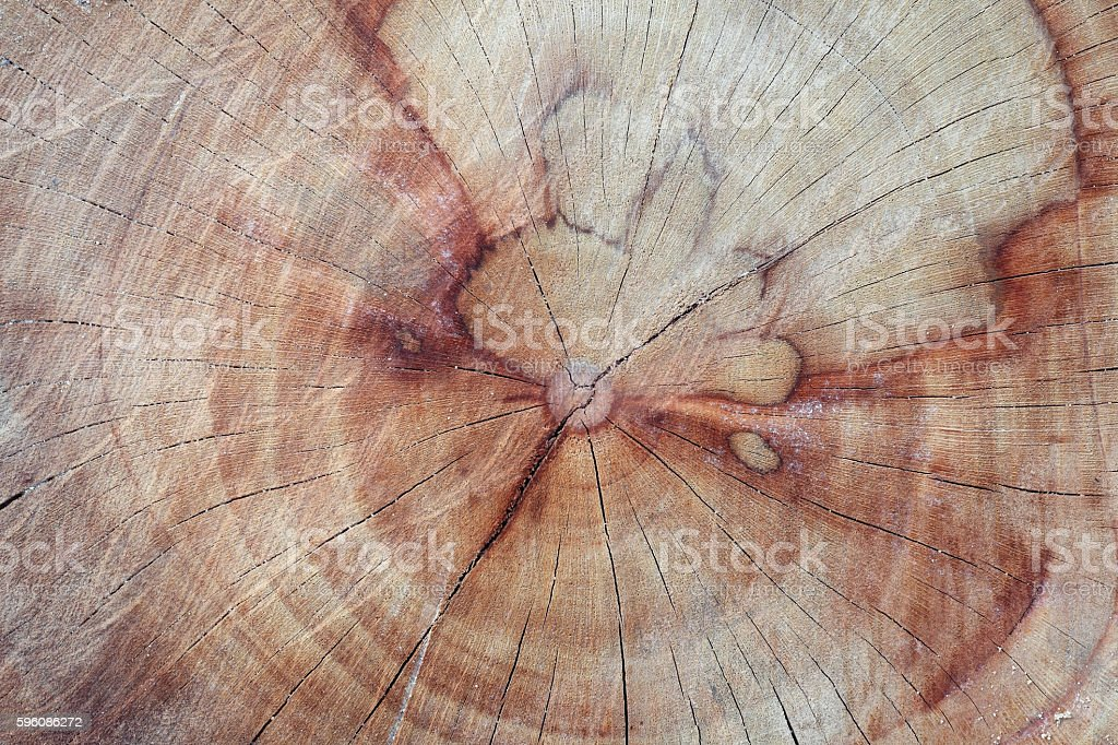 cross section of old stump royalty-free stock photo