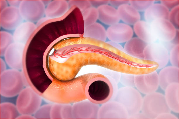 Cross Section Of Pancreas on bloodcells background