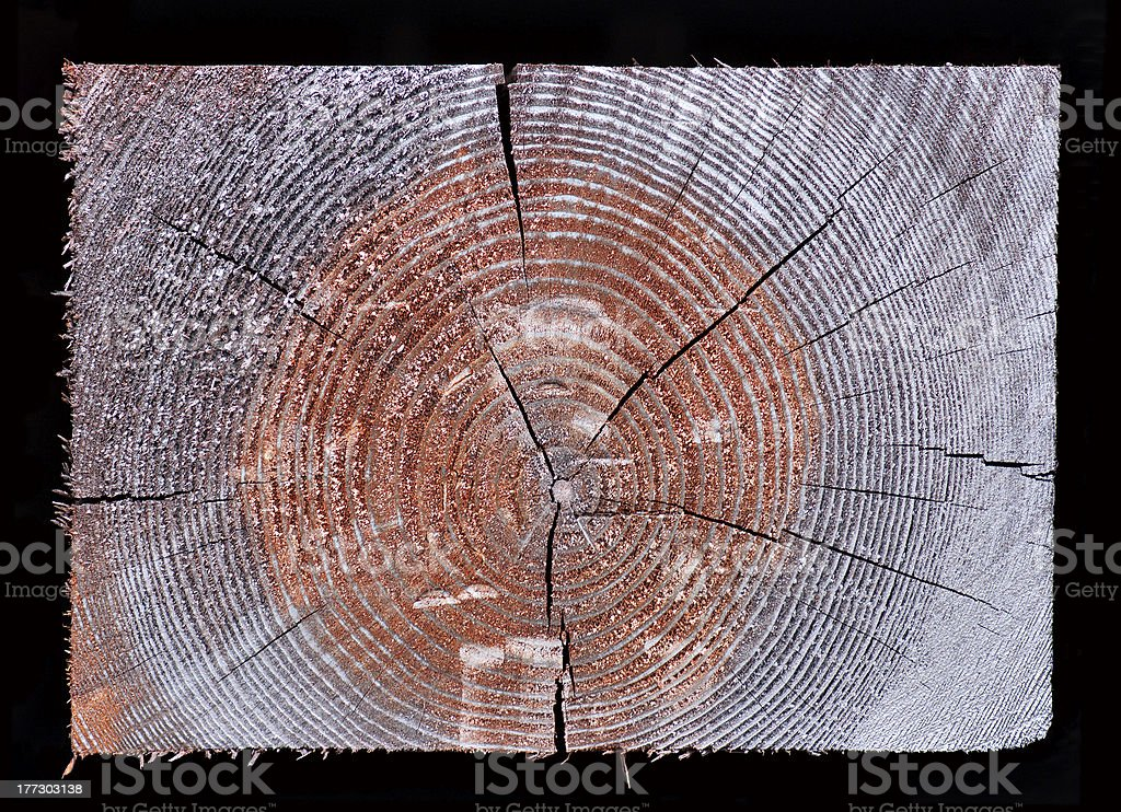 Cross section of rectangular wood royalty-free stock photo