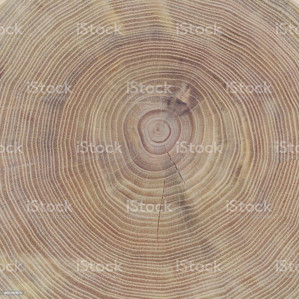 Sección transversal del tronco de la acacia como un fondo o telón de fondo - foto de stock