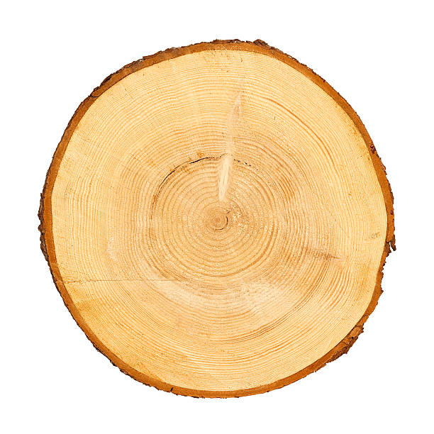 Cross section of tree trunk Cross section of tree trunk isolated on white, clipping path included log stock pictures, royalty-free photos & images