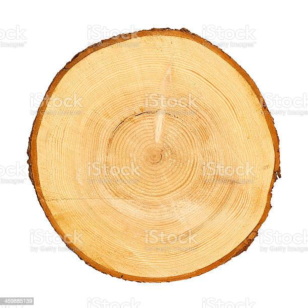 Photo of Cross section of tree trunk