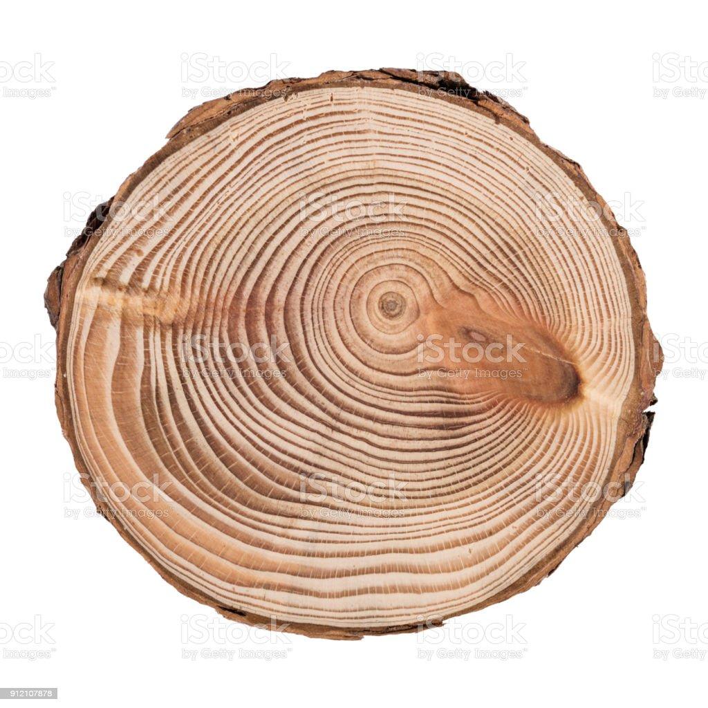 Sección transversal de tronco de árbol muestra los anillos de crecimiento aislados sobre fondo blanco - foto de stock