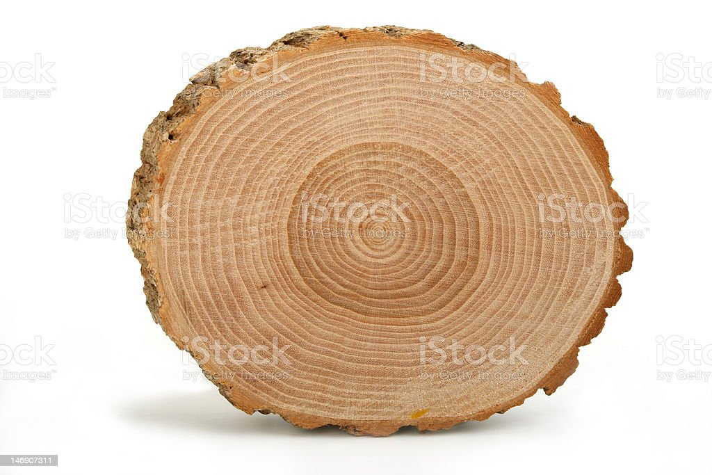 Cross section of tree trunk showing growth rings stock photo