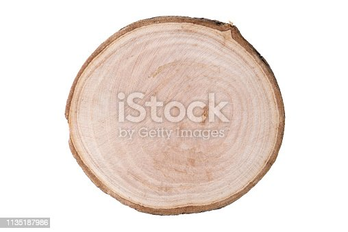 Cross Section Of Wood