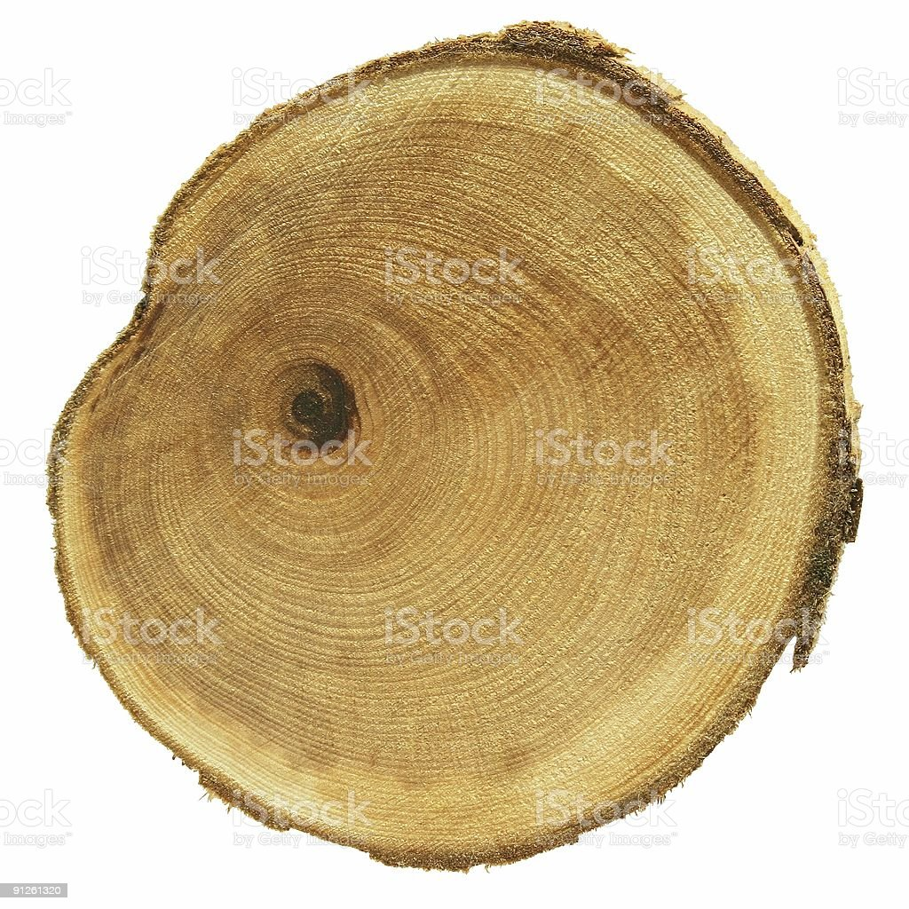 cross section of wood royalty-free stock photo