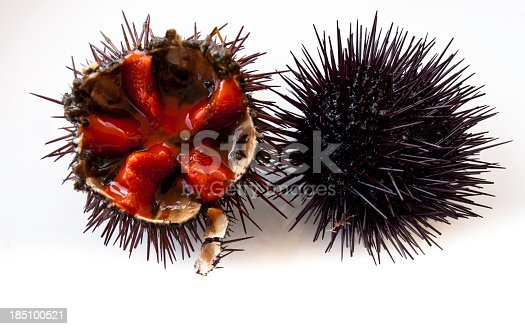 Close-up of sea urchins , ready to eat
