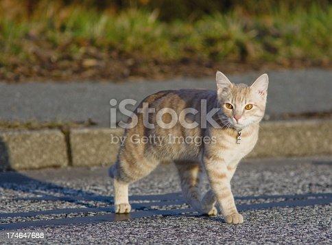beauty jung farmer kitten