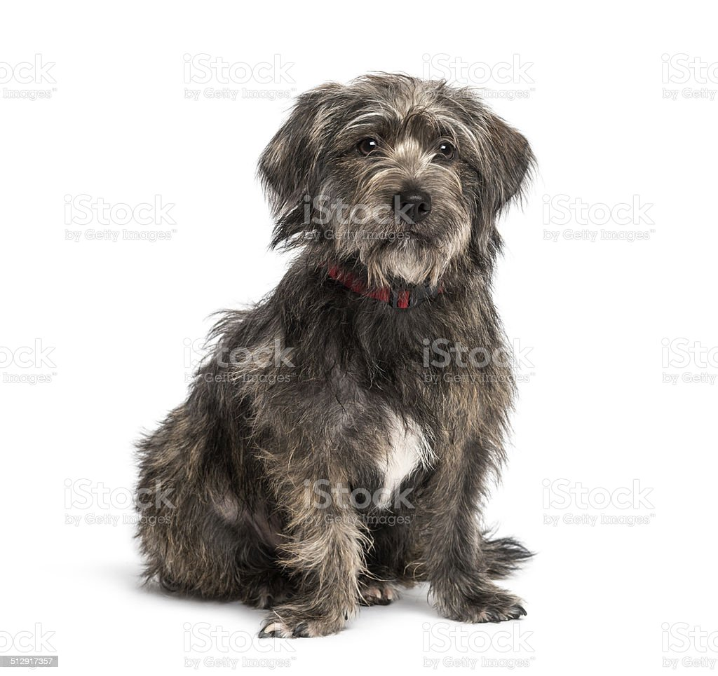 Crossbreed sitting and looking away stock photo