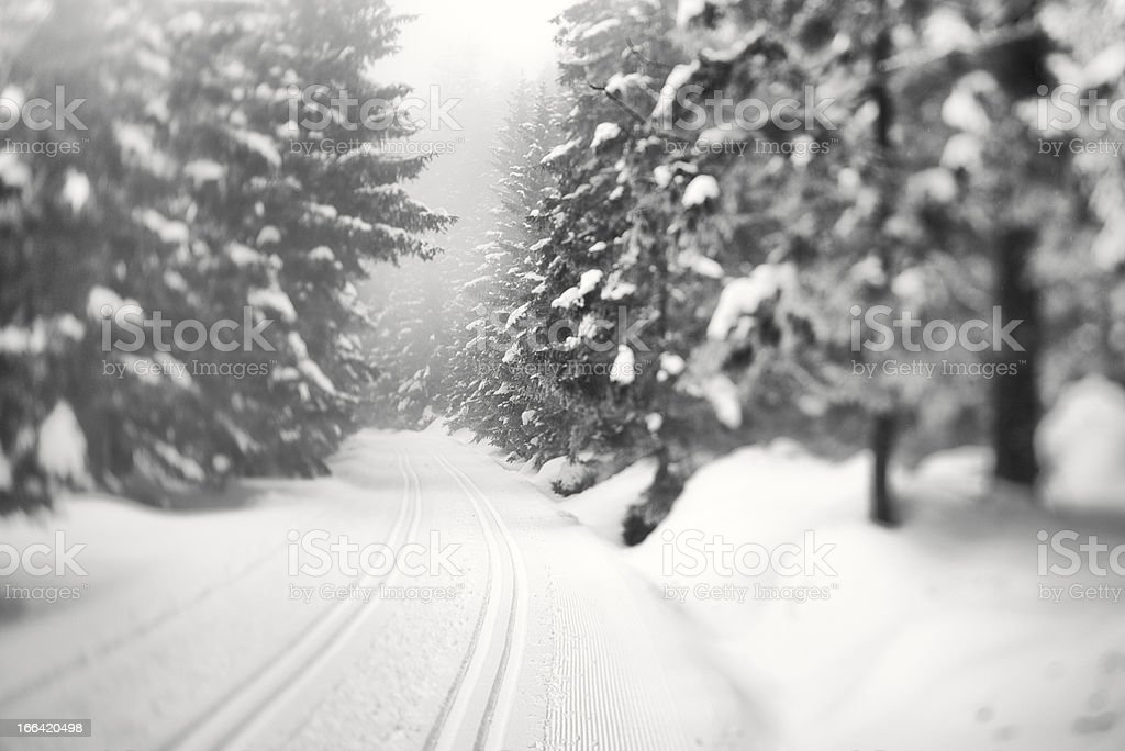 Cross-country ski run through snow covered spruce trees, Black a royalty-free stock photo