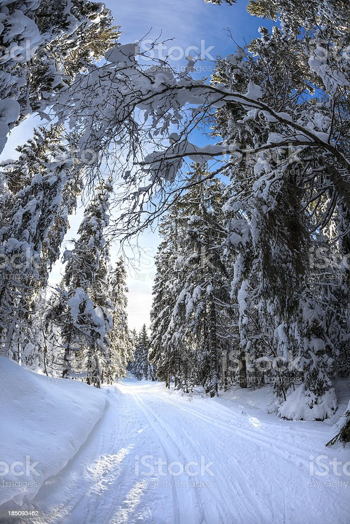 Cross-country ski track in Oslo, Norway royalty-free stock photo