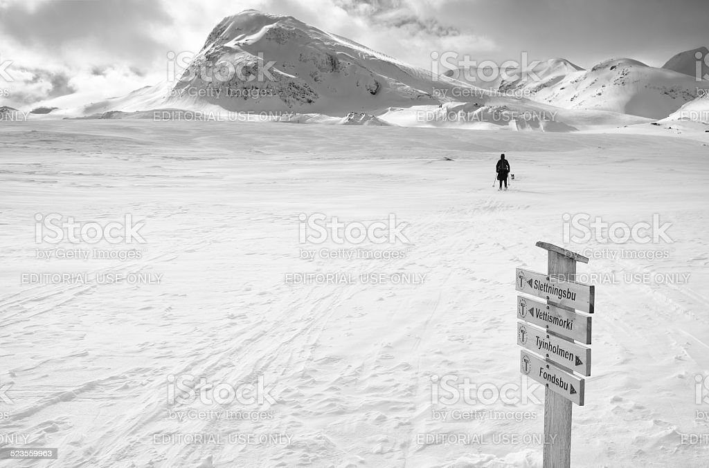 Cross-country skier and dog in winter mountains royalty-free stock photo