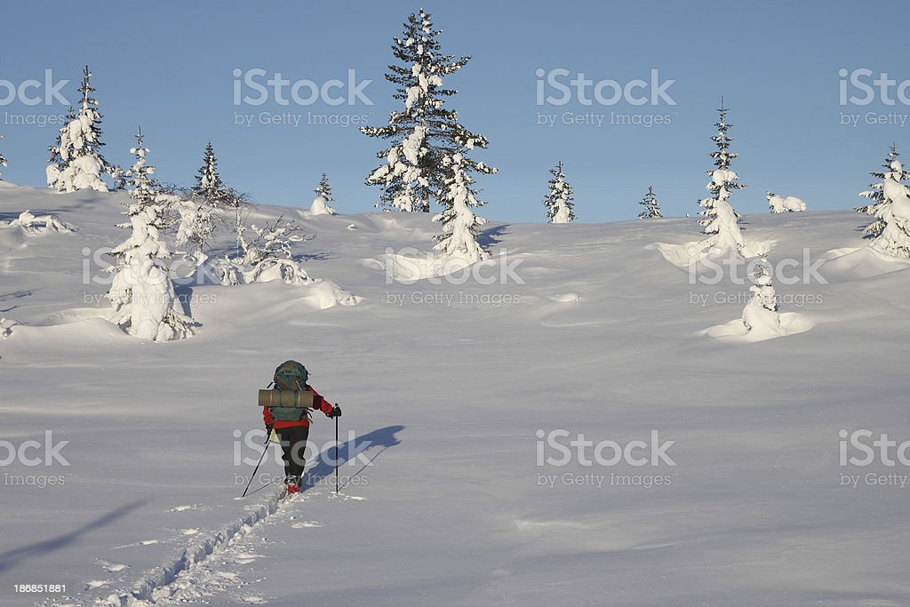 Cross-country skiing in deep snow stock photo