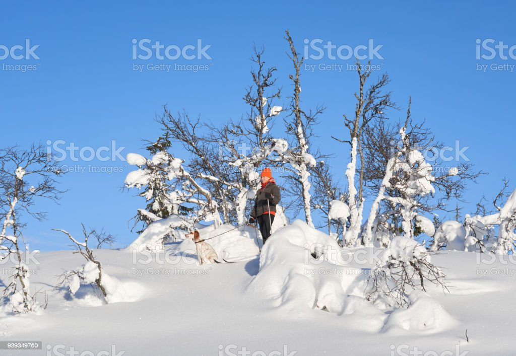 Cross-country skiing with dog in the mountains, Synnfjell Oppland County Norway stock photo