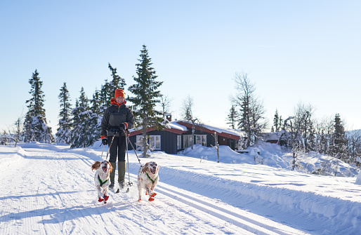 Cross-country skiing with dogs in the mountains, Synnfjell Oppland County Norway