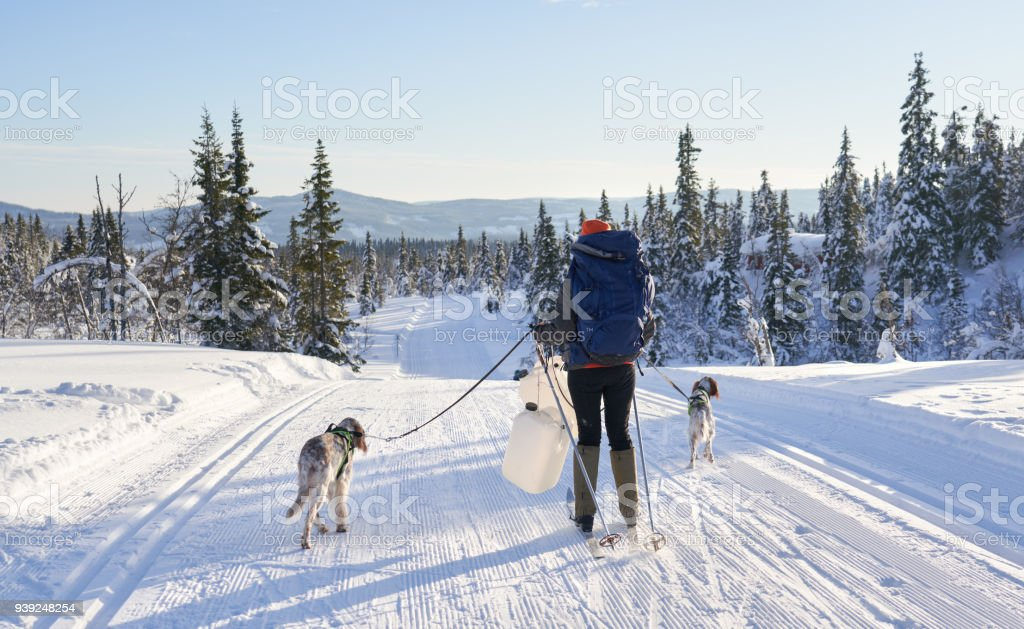 Cross-country skiing with dogs in the mountains, Synnfjell Oppland County Norway stock photo