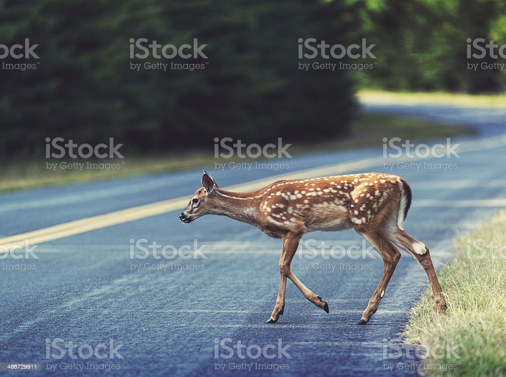 Crossing the Parkway royalty-free stock photo