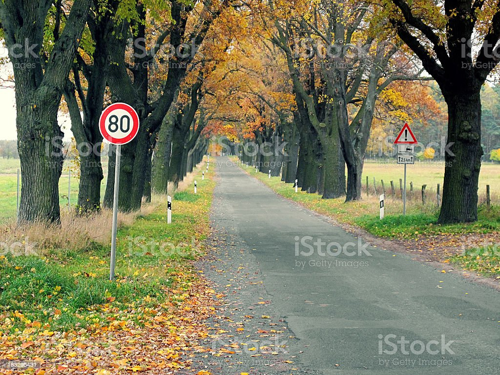 cross-processed country road with oak tree autumn and sign stock photo