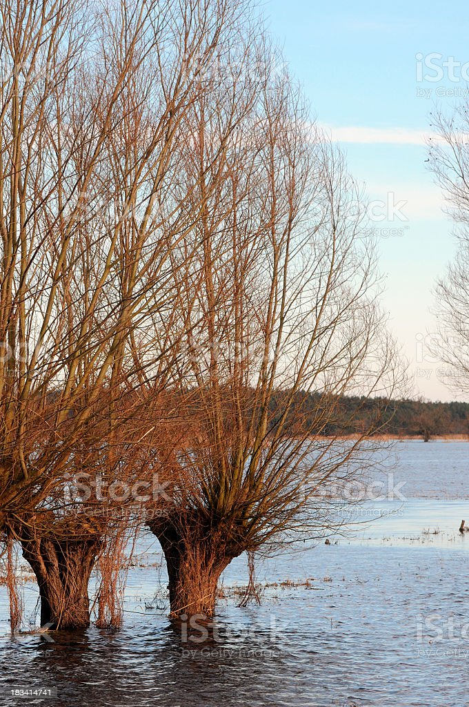 cross-processed of havel River with willow tree (Brandennburg Germany) stock photo