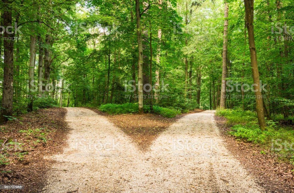 Crossroad in green forest stock photo