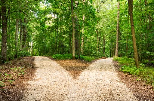 Kreuzung Im Grünen Wald Stockfoto und mehr Bilder von Abschied