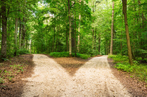 crossroad in green forest - separation stock photos and pictures