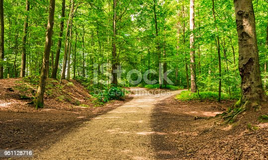 Forked roads right and left in green forest