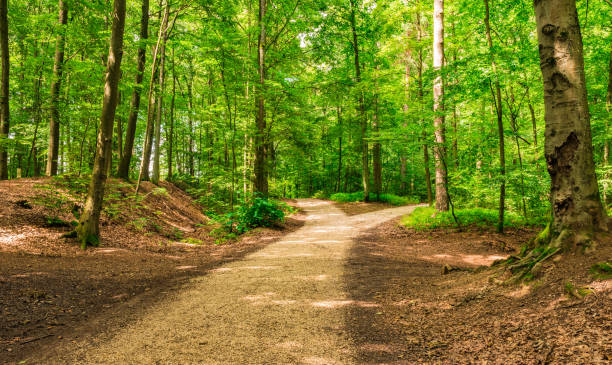 Crossroad two ways, choose the way Forked roads right and left in green forest forest stock pictures, royalty-free photos & images