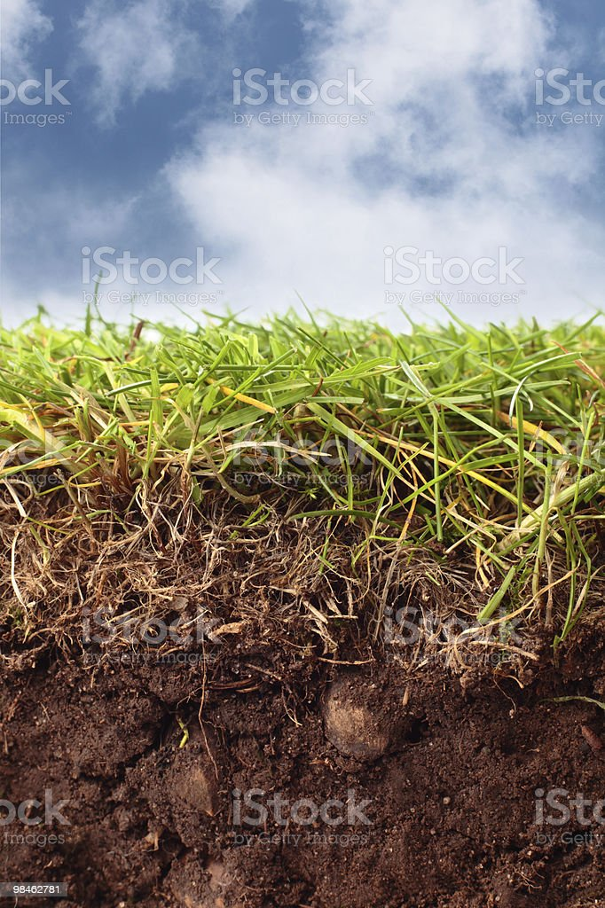cross-section from lawn showing soil grass and sky royalty-free stock photo