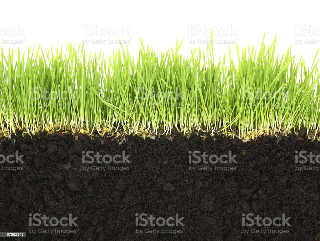 Cross-section of soil and grass isolated on white background stock photo