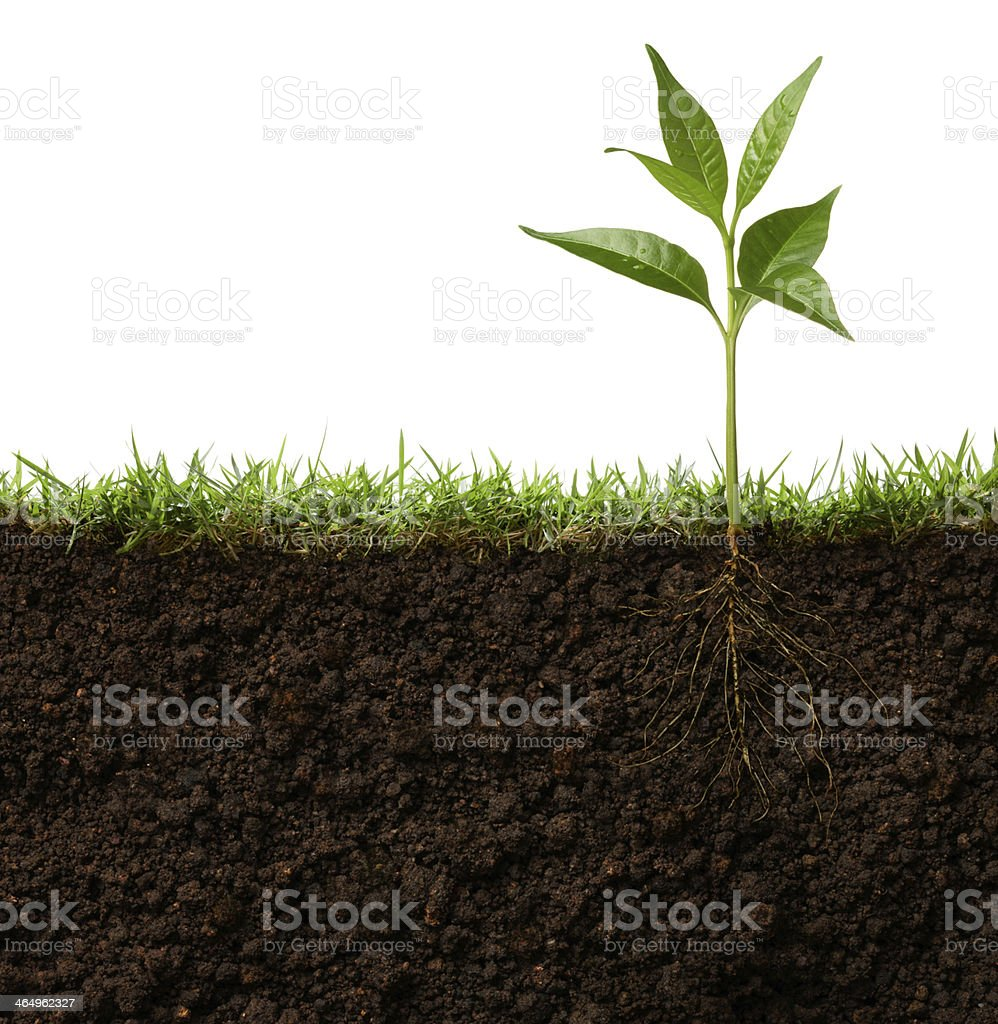 Cross-sectional view of leafy plant stock photo