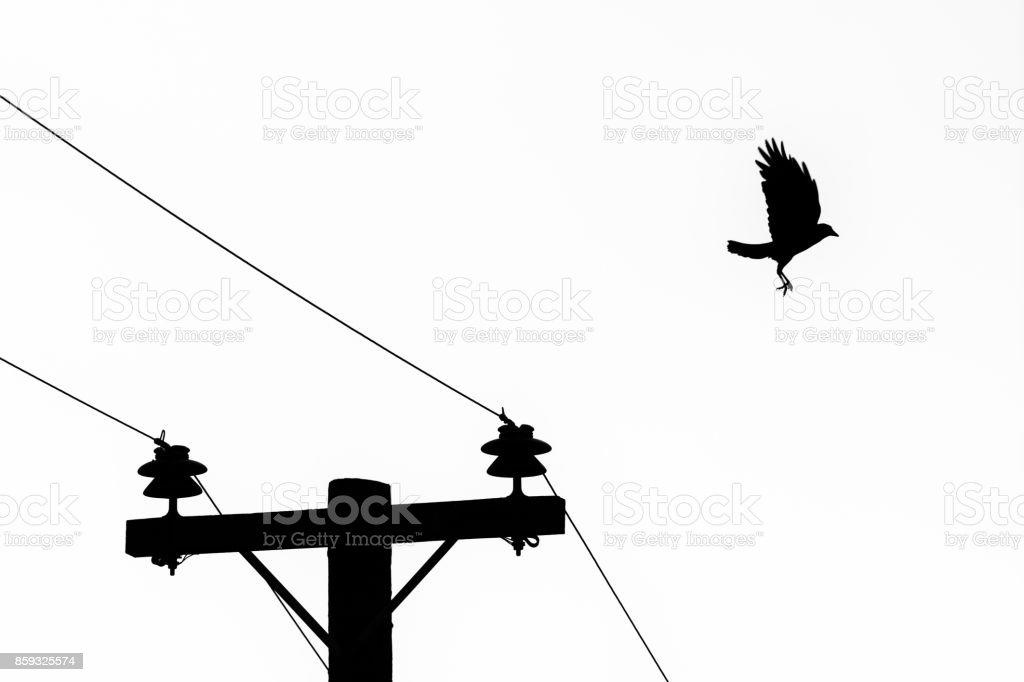 Crow Flying Away stock photo