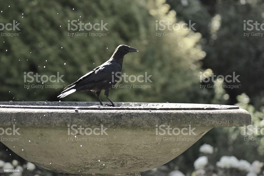 Crow in stone birdbath gothic styled royalty-free stock photo