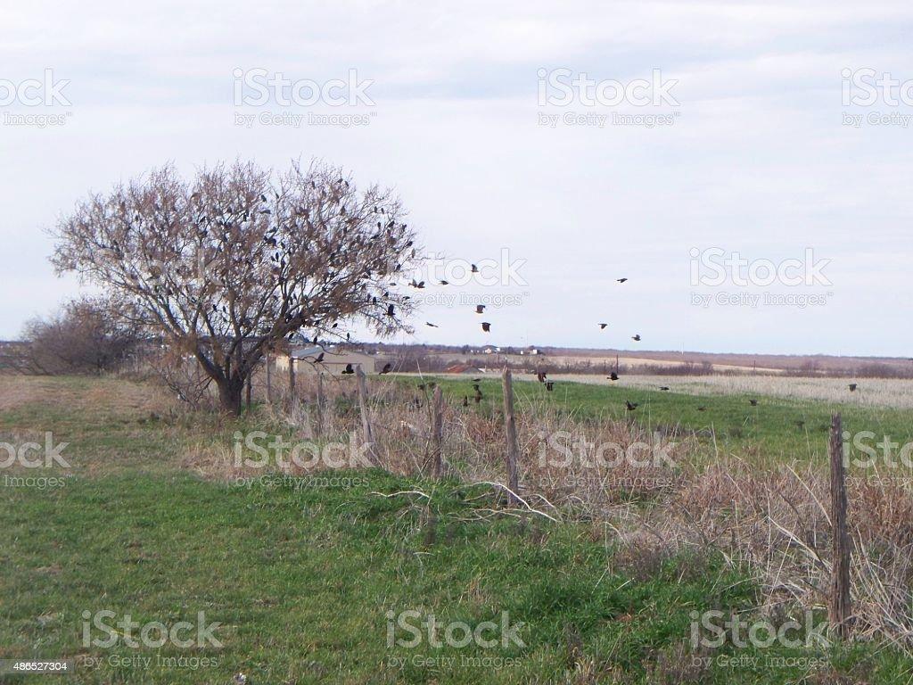 Crow Migration Part 2 stock photo