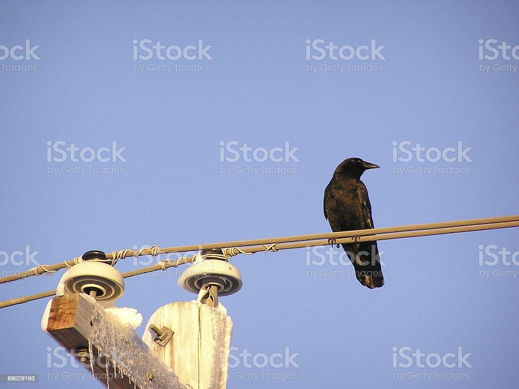 Crow auf einen winterlichen Wire 1 Lizenzfreies stock-foto
