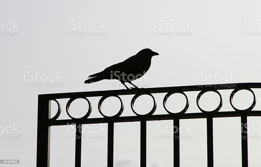 Crow On Fence royalty-free stock photo