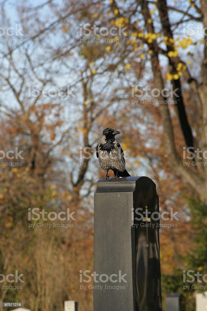 Corneille sur Pierre tombale photo libre de droits