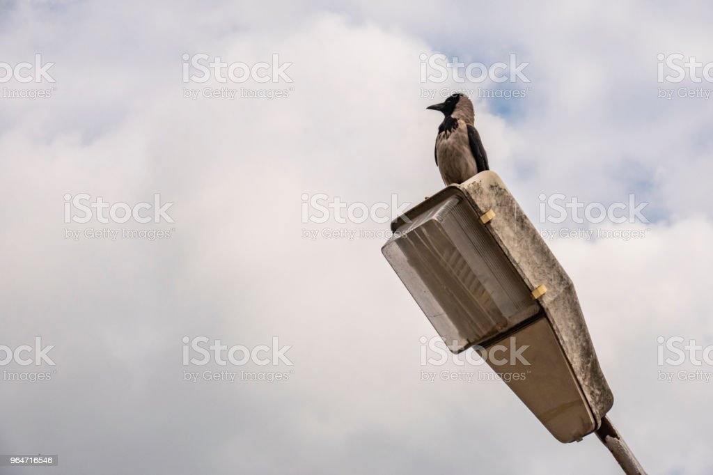 crow on street lamp and blue sky royalty-free stock photo