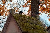 Stone cross in the cemetery. Golden autumn over eldest tombs