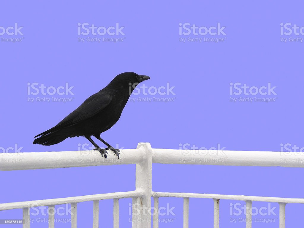 Crow (isolated) royalty-free stock photo