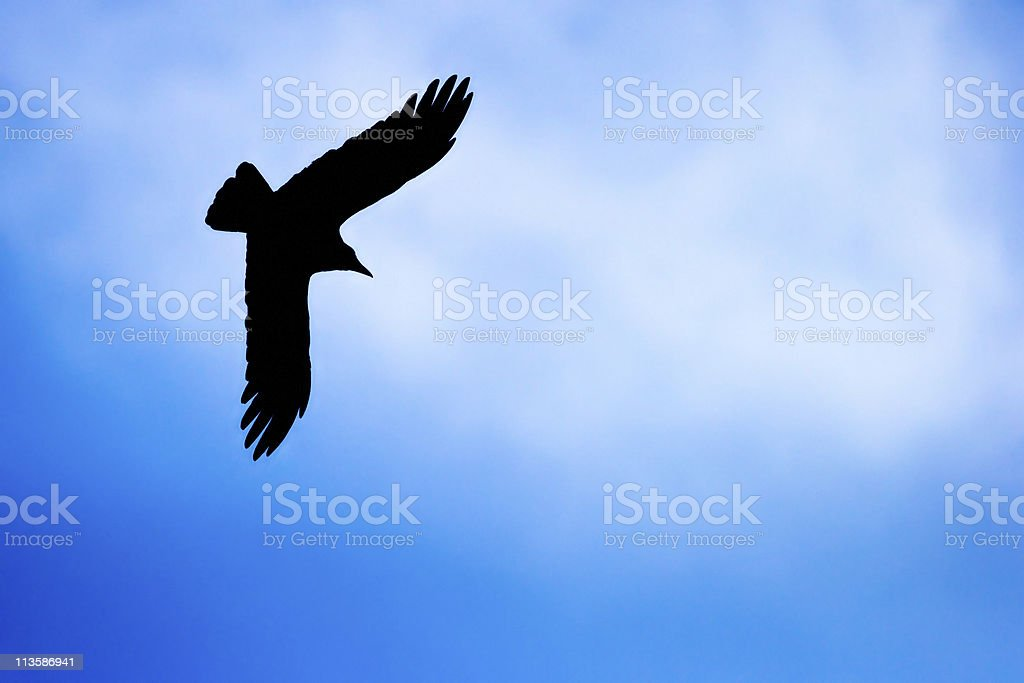 Crow silhouette royalty-free stock photo