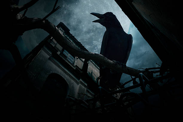 crow sit on dead tree over old castle, halloween concept - croak stock pictures, royalty-free photos & images